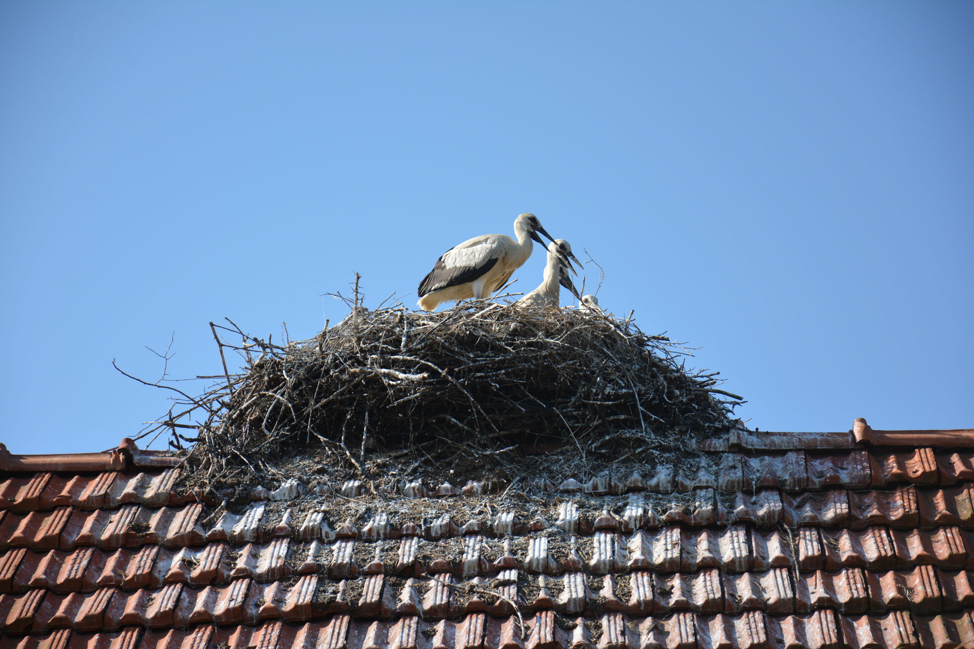 Isplata naknada za rodina gnijezda na krovovima objekata u 2019. godini