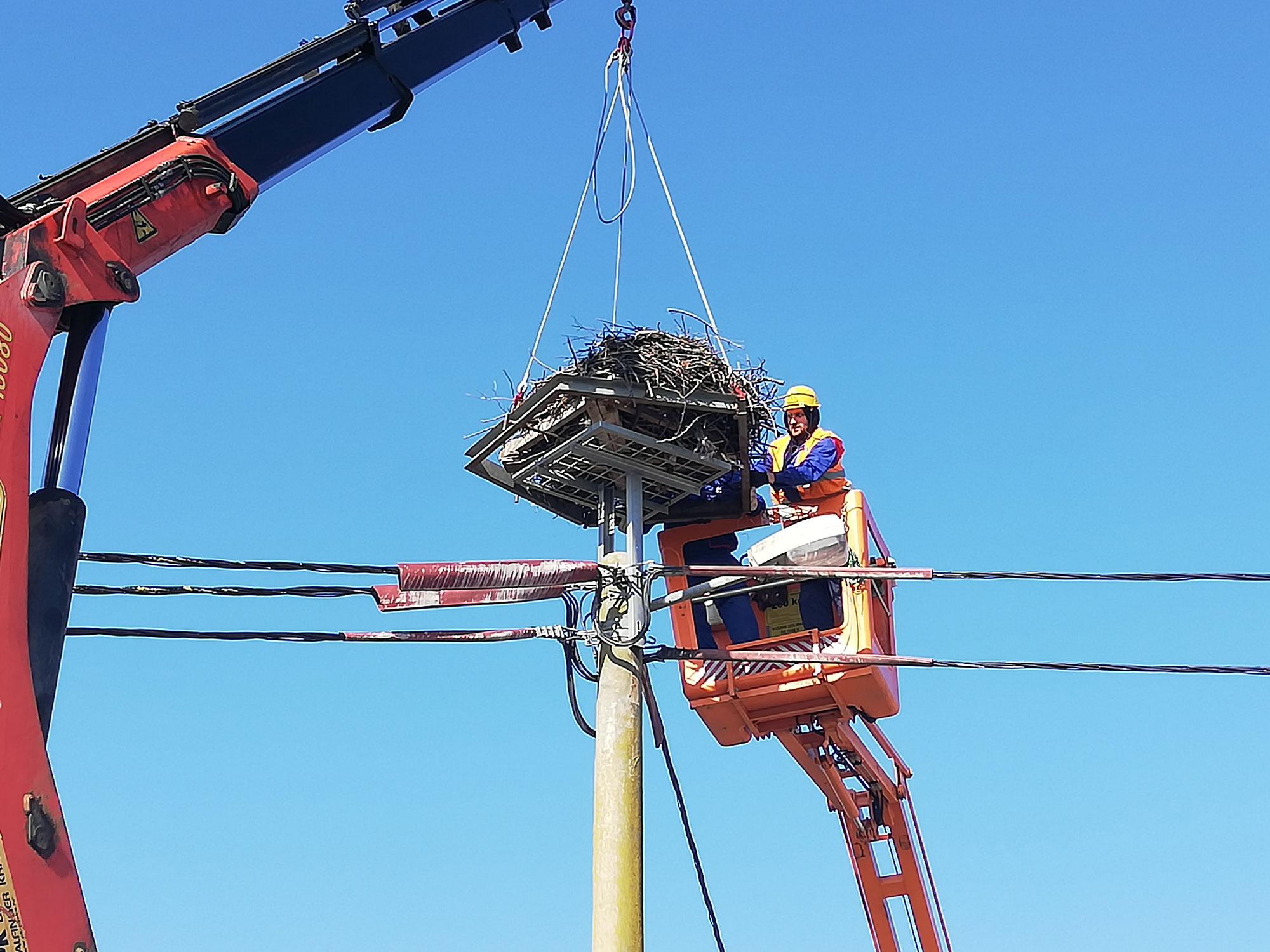 Provedba aktivnosti zamjene nosača rodinih gnijezda