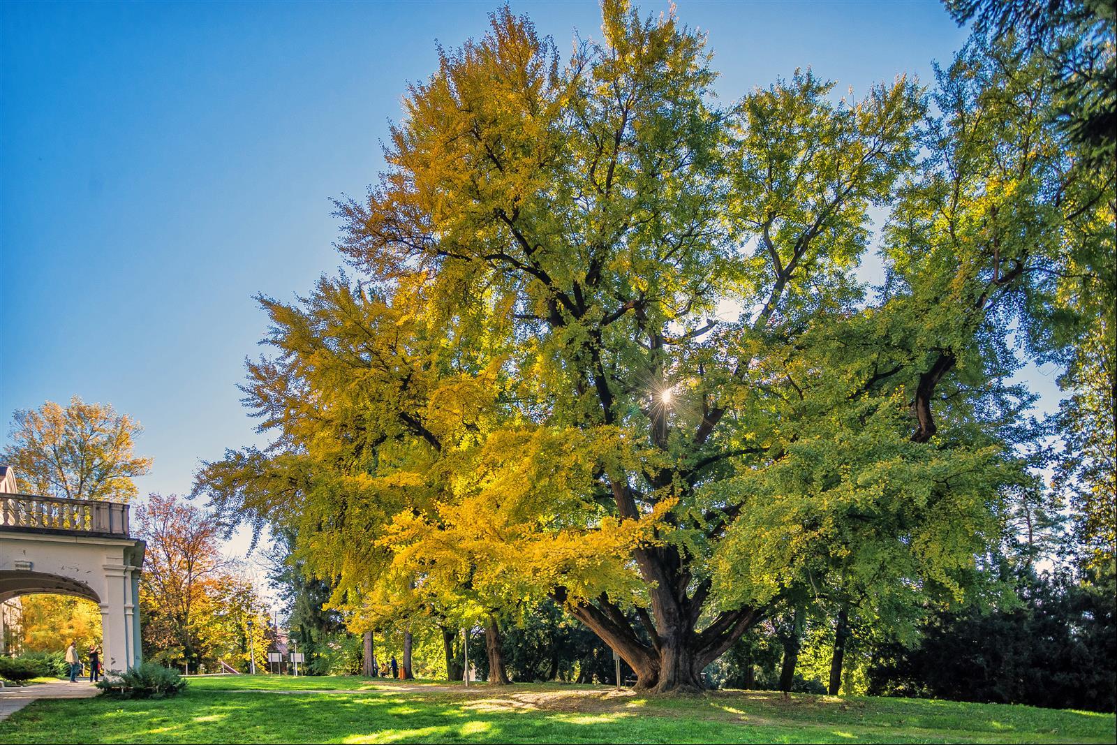 Hrvatsko stablo 2019. godine