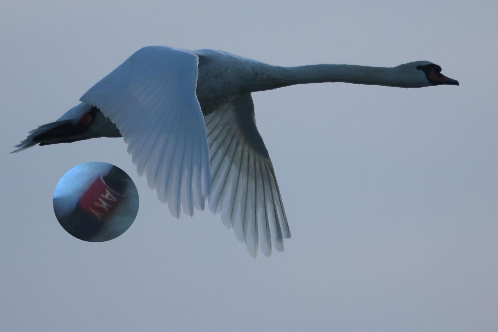 Prstenovane ptice na ribnjacima Siščani i Blatnica